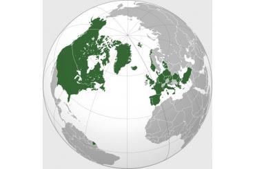 Drapele tari membre NATO